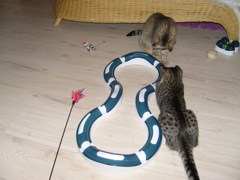 Linus: Spielzeugtest: CatIt Spielschienen (4 von 5 Sternchen)