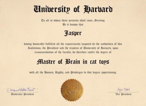 Diplom Harvard