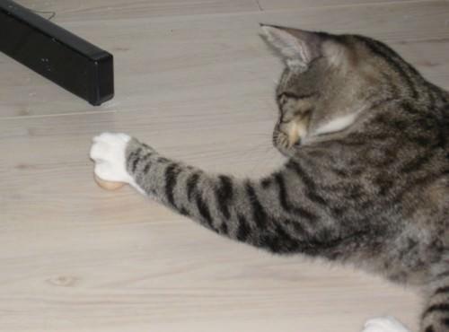 linus erkl rt sprichw rter 4 the3cats. Black Bedroom Furniture Sets. Home Design Ideas