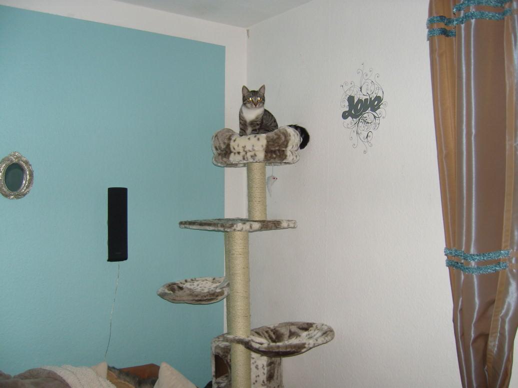 Linus: Wir haben einen neuen Kratzbaum!