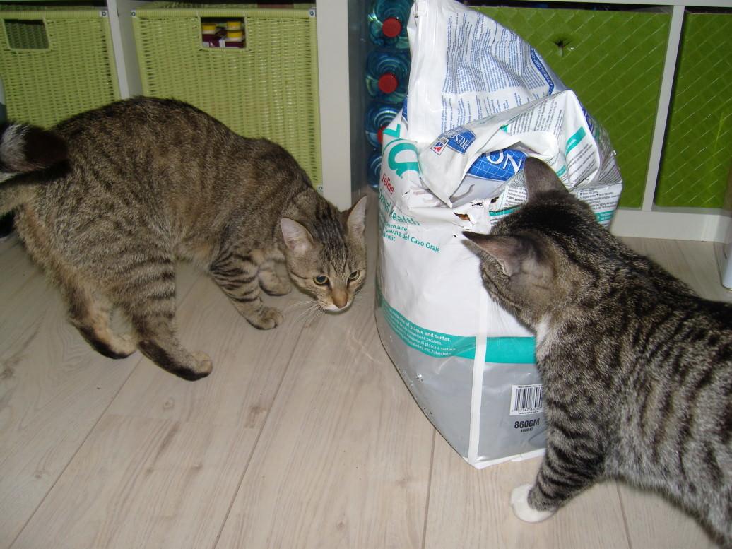 Lucy: Pure Naturfutter und wir haben Diebe in der Wohnung!