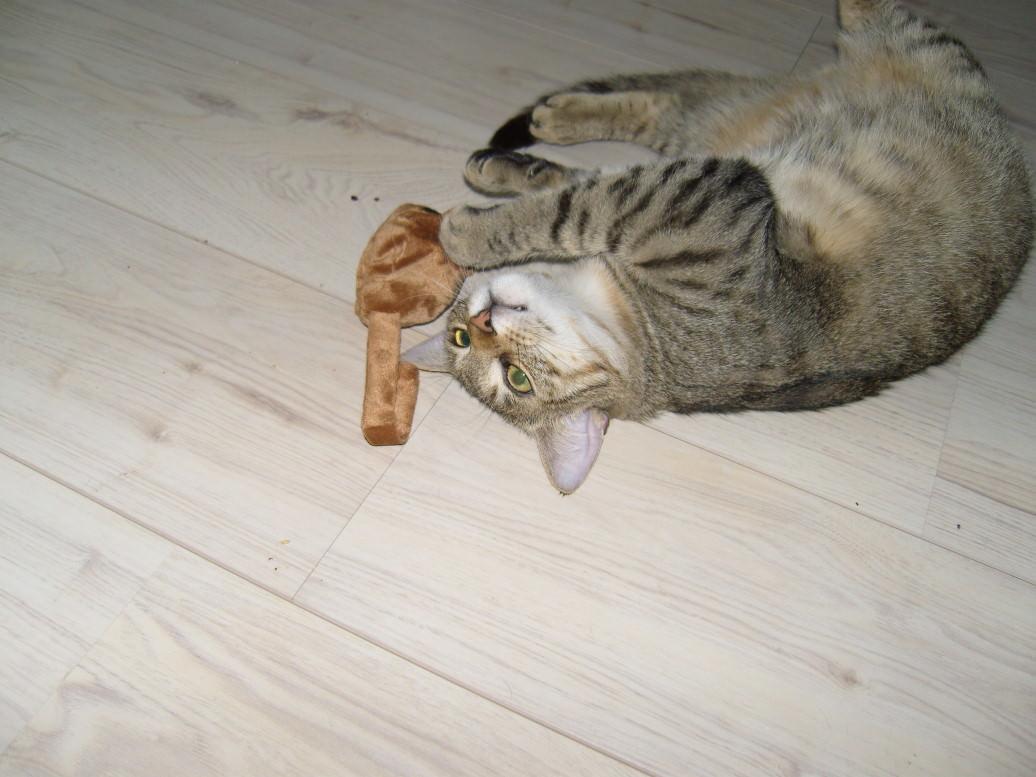 Jasper: Alles für die Katz!