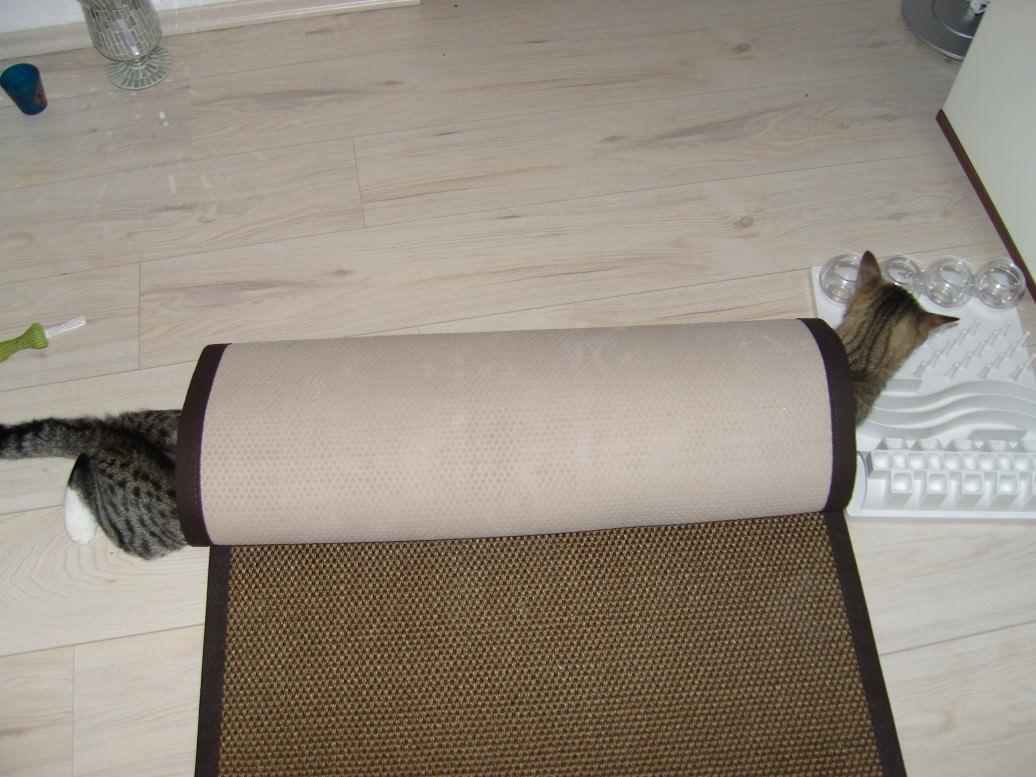 Jasper: Heute ist Weltkatzentag!