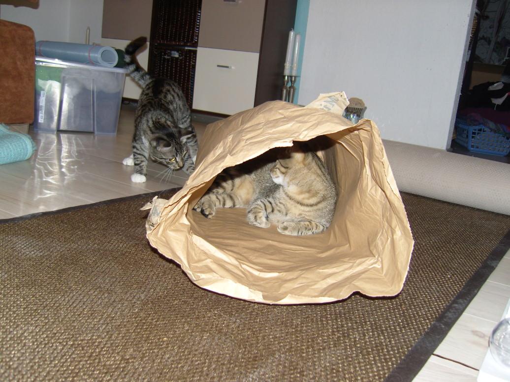 Lucy: Wir bekommen eine Filzhöhle, made by Frauchen!