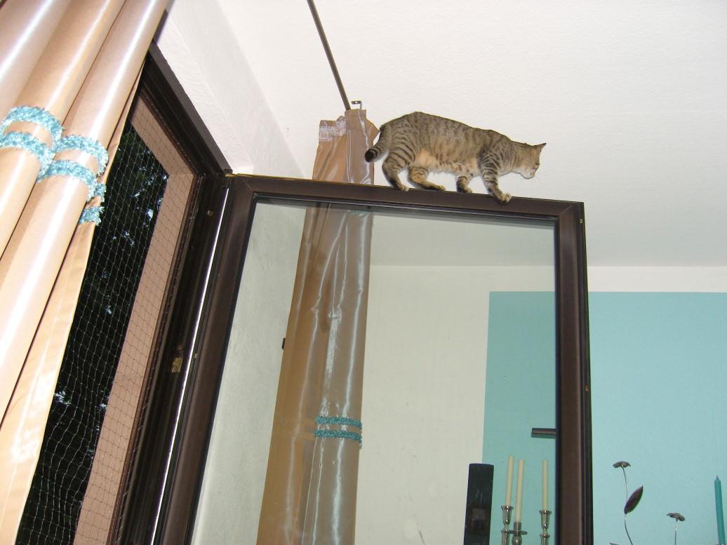 Jasper: Deja Vu für Frauchen! oder: Unter der Decke ist es einfach schöner!
