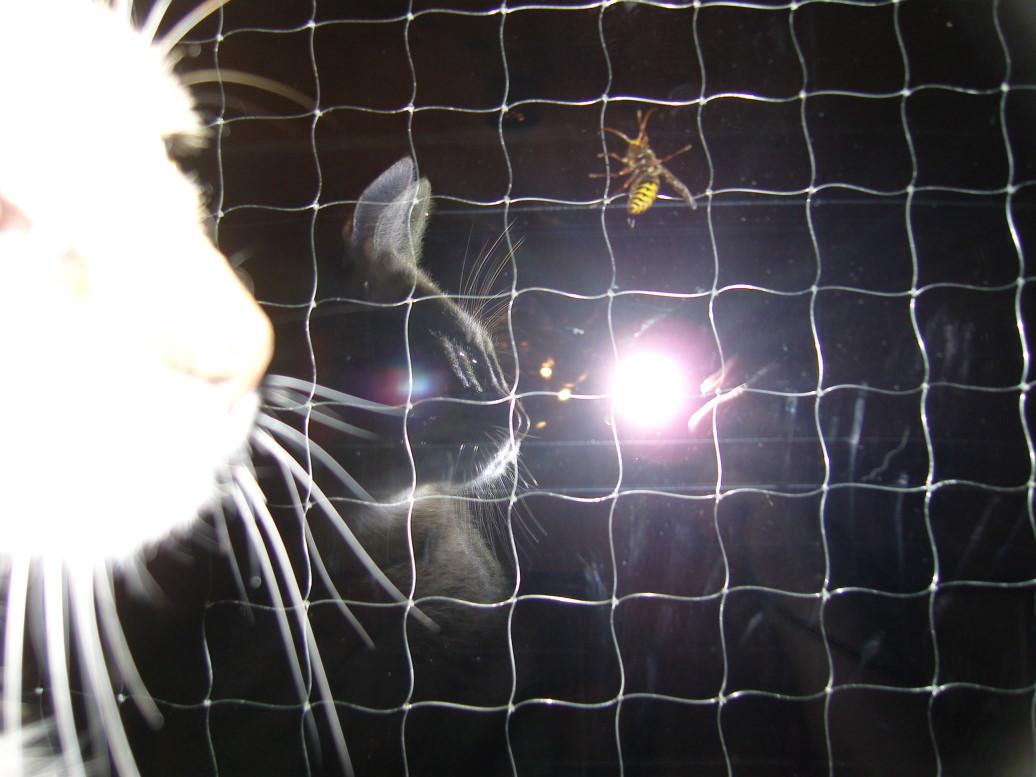 Jasper: Fliegeviecher mit Streifen müssen nach Hause fliegen…