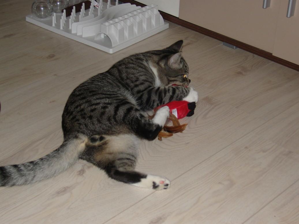 "Linus: Katzenspielzeug im Test: ""Cardinal Call"" Vogel mit Soundchip"