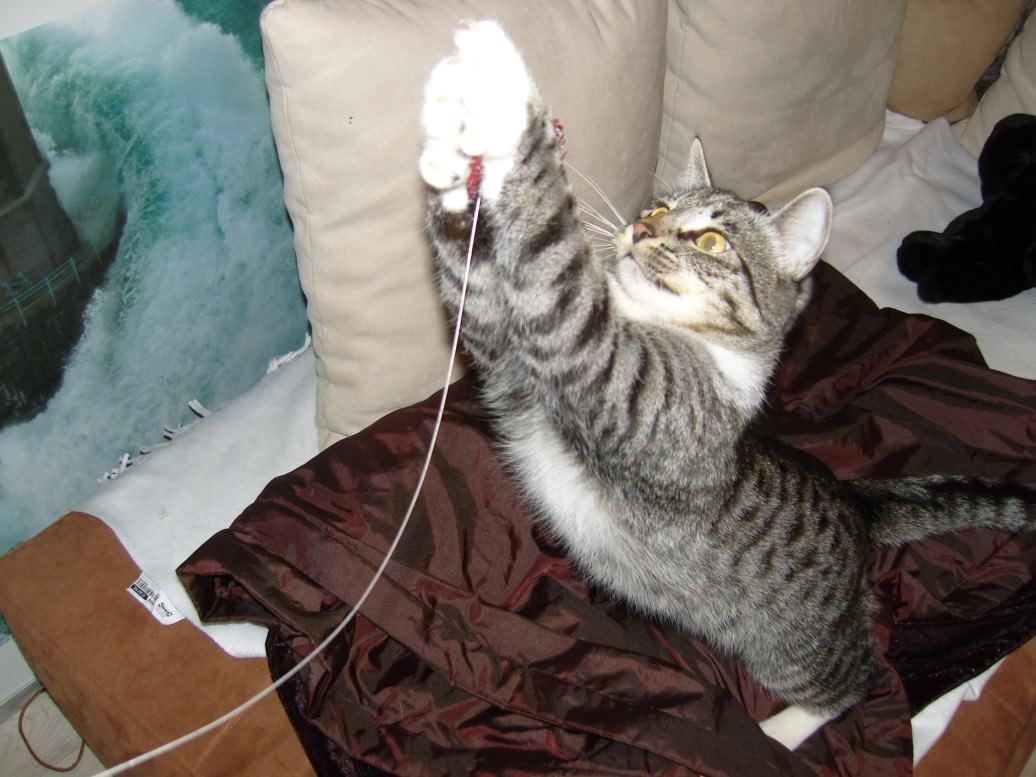 Lucy: Einmal Quatsch mit Soße, bitte! oder: Wie Katzen spielen…
