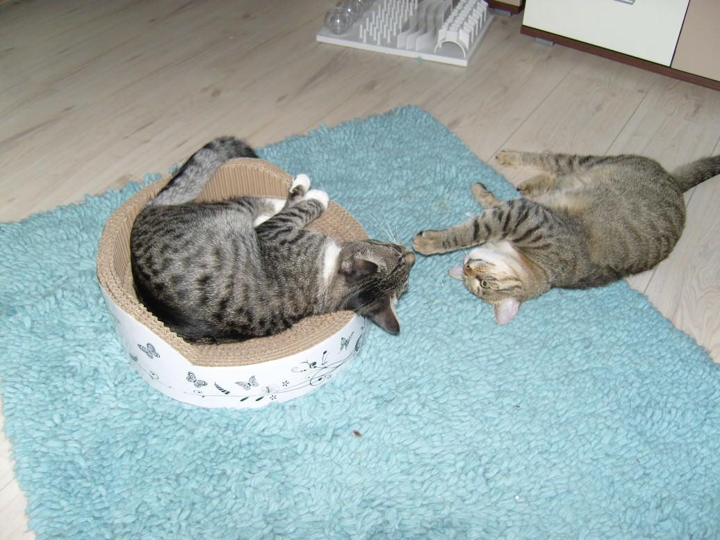 """Linus: Wir haben ein neues Katzbett, äh, Kratzbrett, ach menno, ich meine natürlich """"Kratzbett"""""""
