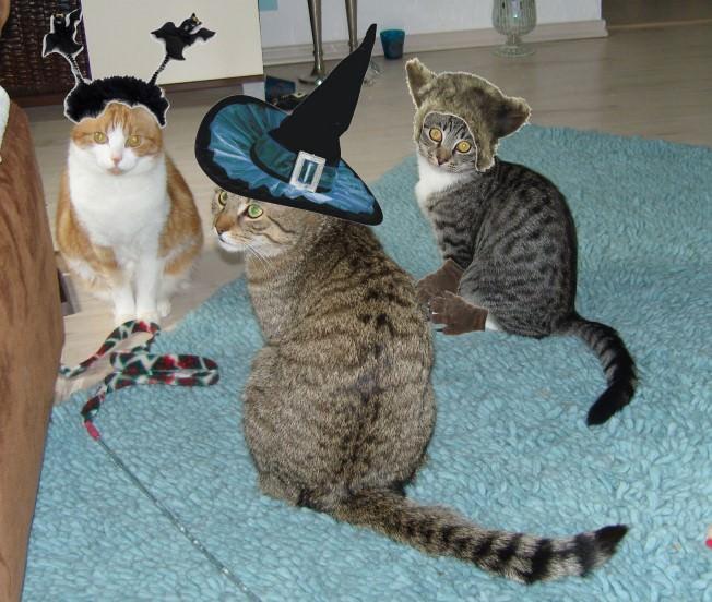 Lucy: Essen wir doch, die Leckerchen! und Happy Halloween!