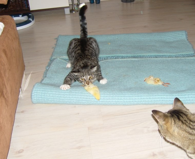 Linus & Jasper: Küken sind klasse!