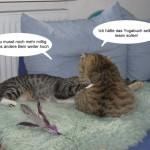 Jasper & Linus: versuchen Yoga…