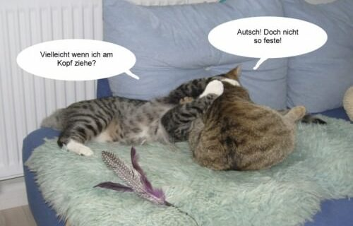Jasper & Linus versuchen Yoga … 4