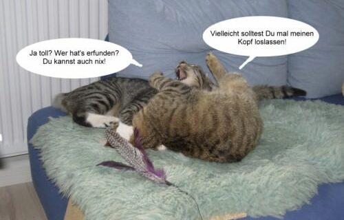 Jasper & Linus versuchen Yoga … 5