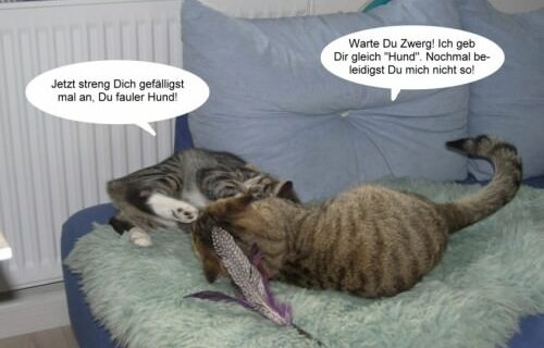 Jasper & Linus versuchen Yoga … 6