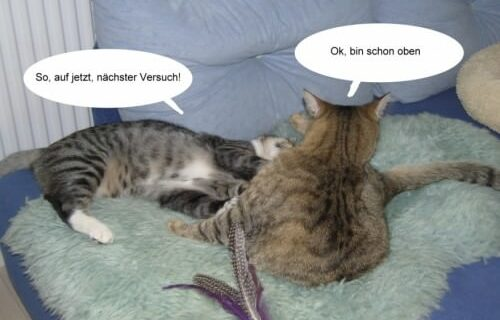 Jasper & Linus versuchen Yoga … 7