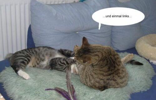 Jasper & Linus versuchen Yoga … 10