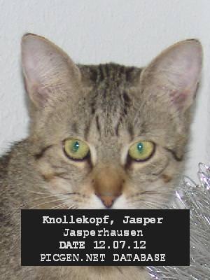 Jasper arrested