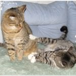 Jasper & Linus: Zeit der Besinnlichkeit…