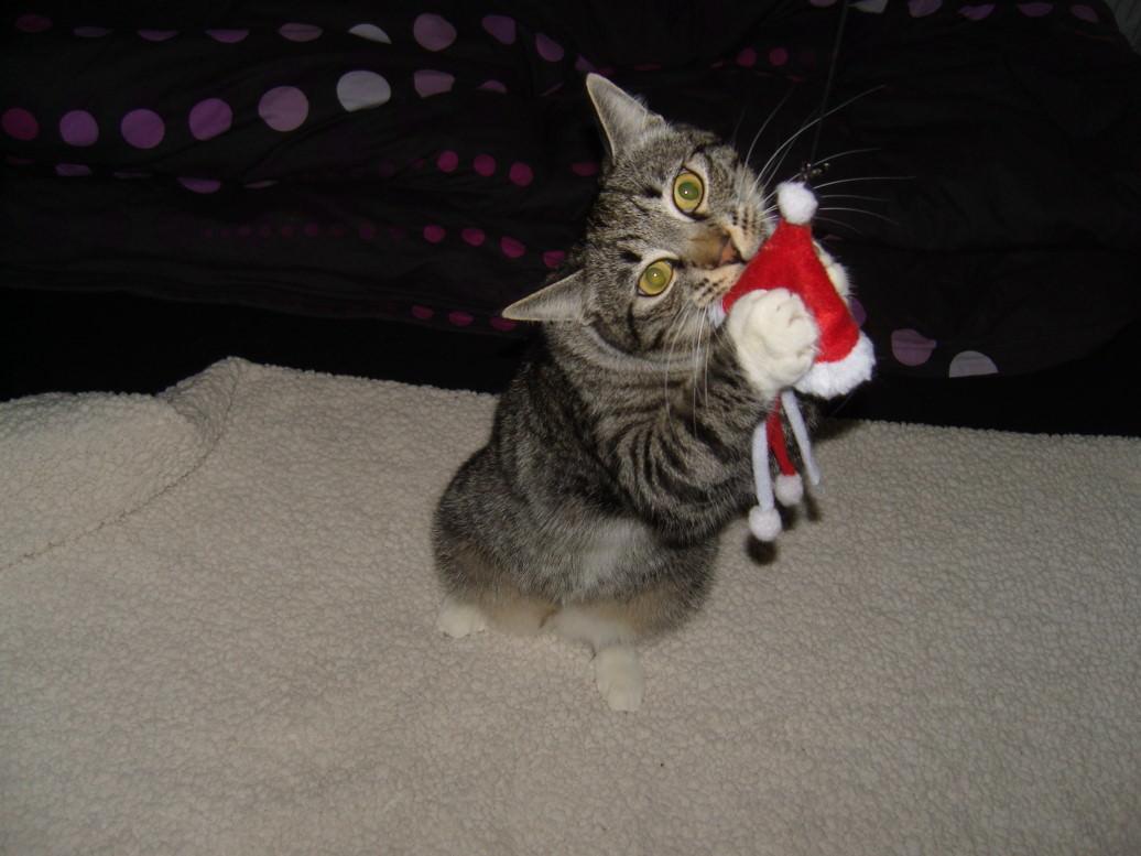 LiJaLu: Wird sind weihnachtslos :-( oder: Weihnachten und die Gefahren für Katzen