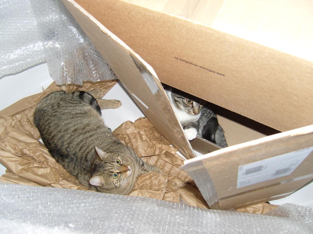 Linus: Wer solche Katzenkumpel hat braucht keine Feinde…