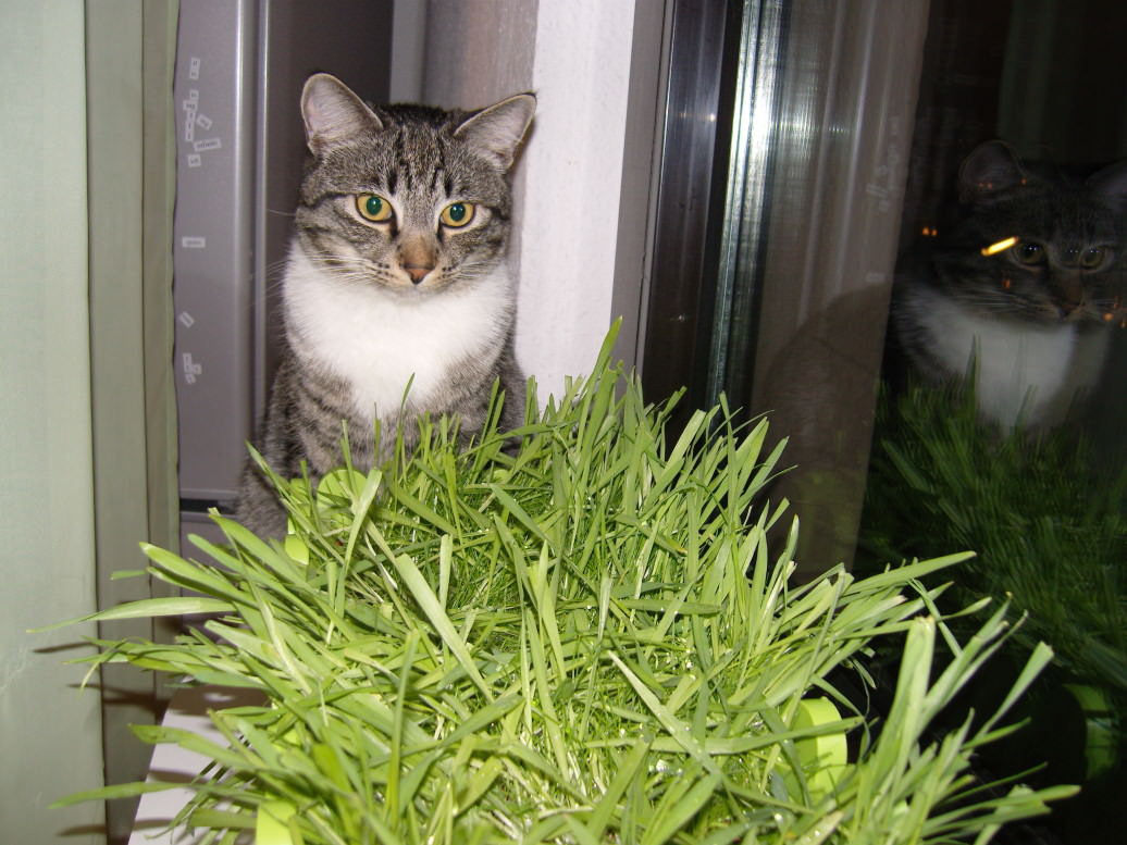 Jasper & Linus: Katzenkiste Tag 17