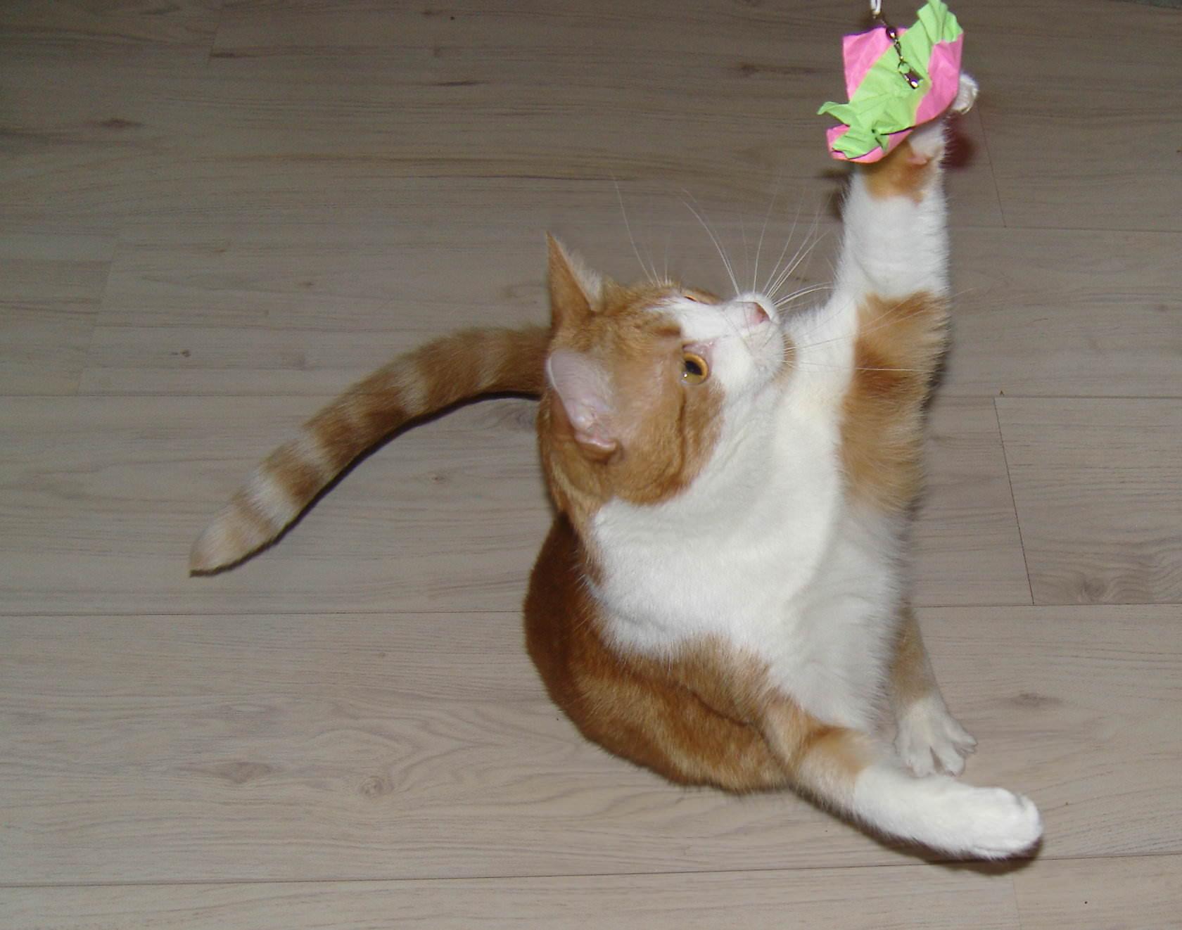 Lucy: Katzenspielzeug selbstgemacht (1) – Papierhänger für Katzenangeln