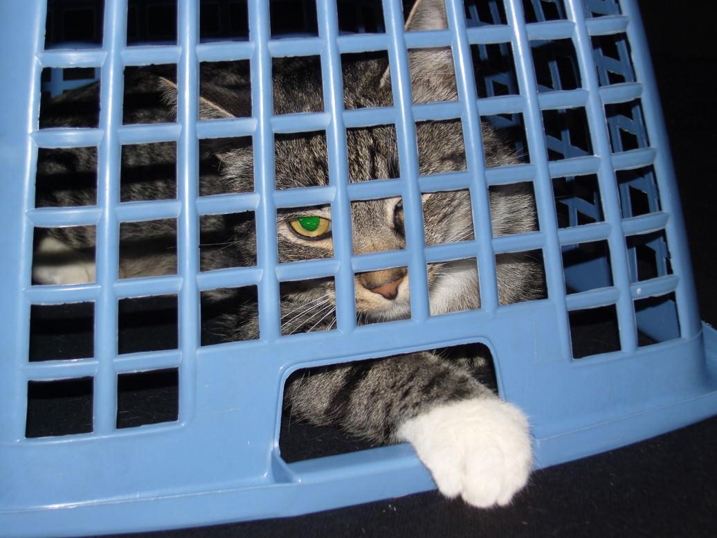 Linus: Gehe direkt ins Gefängnis! Begib Dich direkt dorthin!