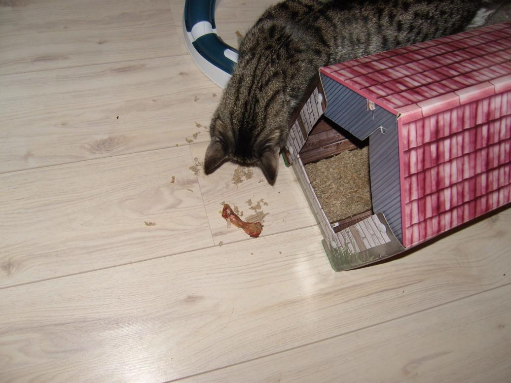 Jasper: Tatort Katzenhäuschen