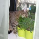 Jasper: Für Gras-Frauchen