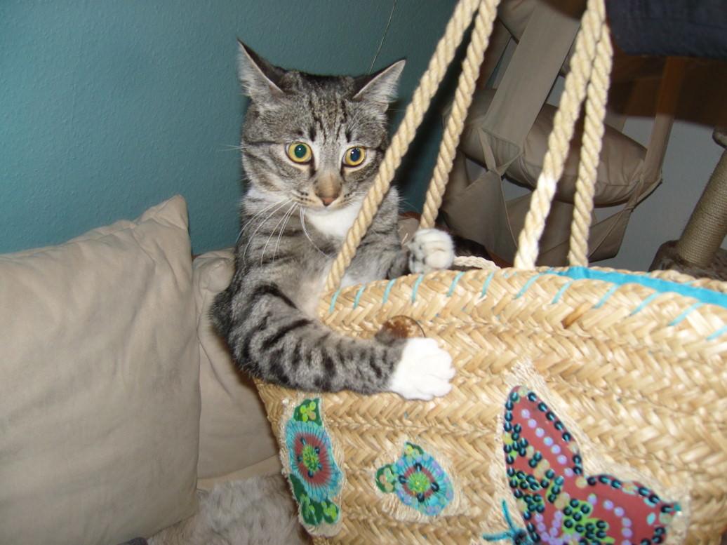 Linus: 5 Kilo Katze vom Markt