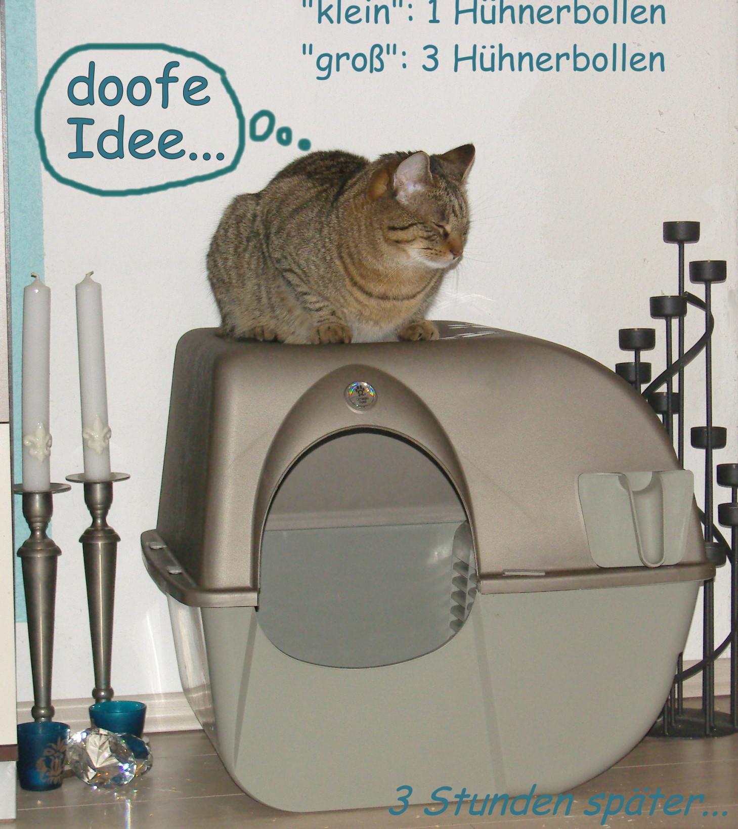 Jasper: …ja das macht die Katze froh… [zooplus Produkttest 1|2]