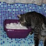 Linus: Schni-Schna-Schnee [2] – Die Kiste