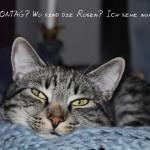Linus: Rosenmontag – ohne Rosen, mit Montag!