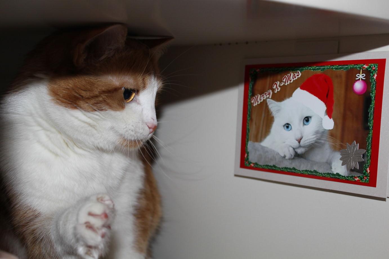 Linus & Jasper: Erwischt! Lucy hat 'nen Schwarm!