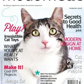 """LiJaLu: Wir sind jetzt """"moderne Katzen"""", jaha!"""