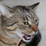 Jasper: Zähneputzen nicht vergessen