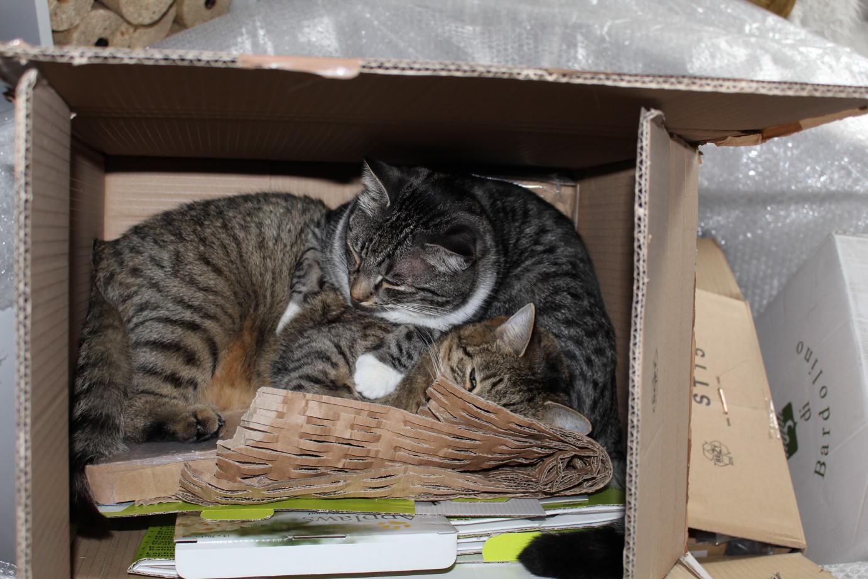 Linus & Jasper: Bekloppte Schlafplätze Teil 1