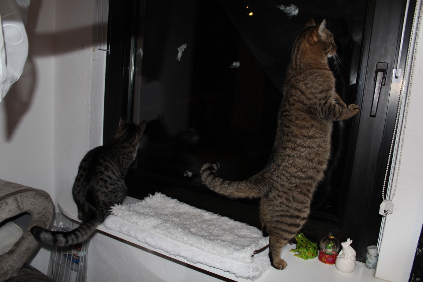 the3cats_2013_03_12_1298