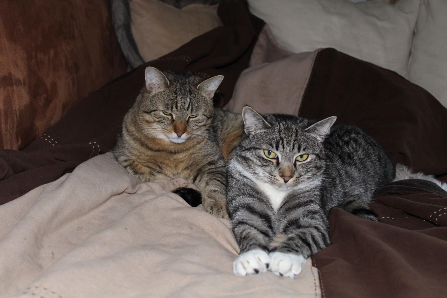 bthe3cats_2013_04_22_3209