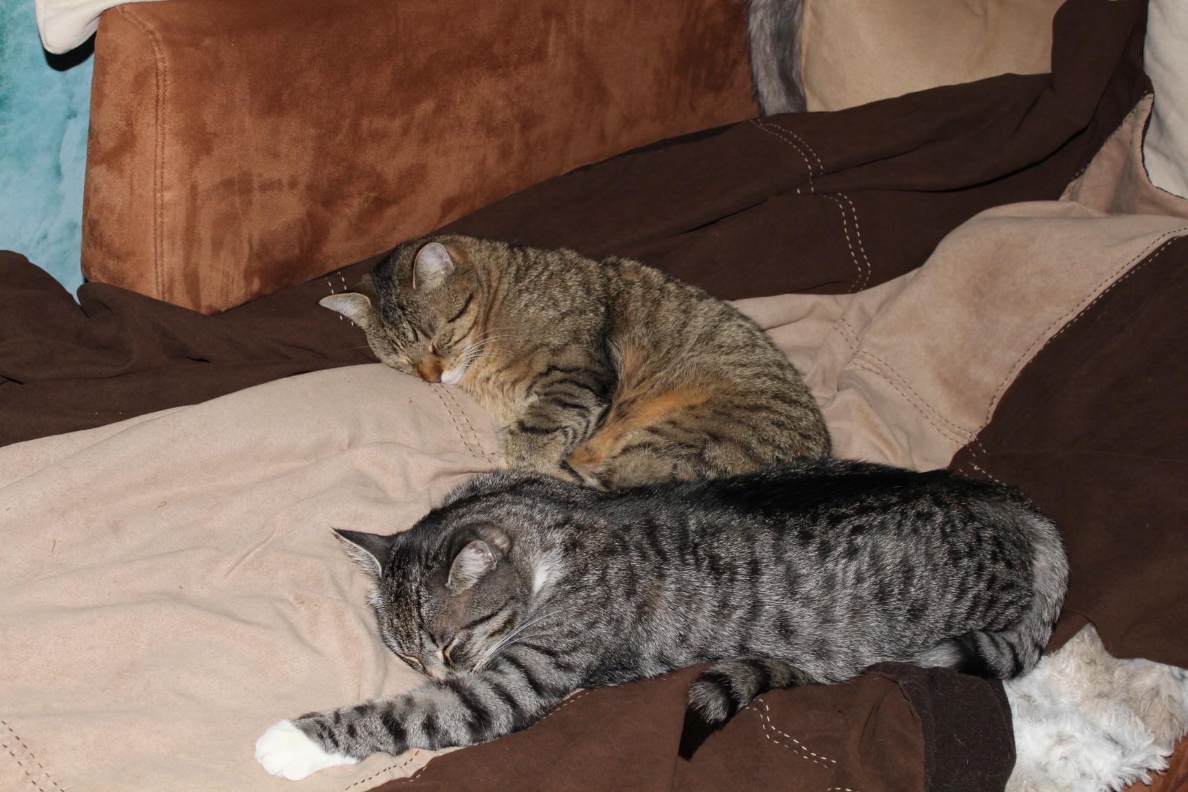 Jasper & Linus: Weggegangen, Platz vergangen