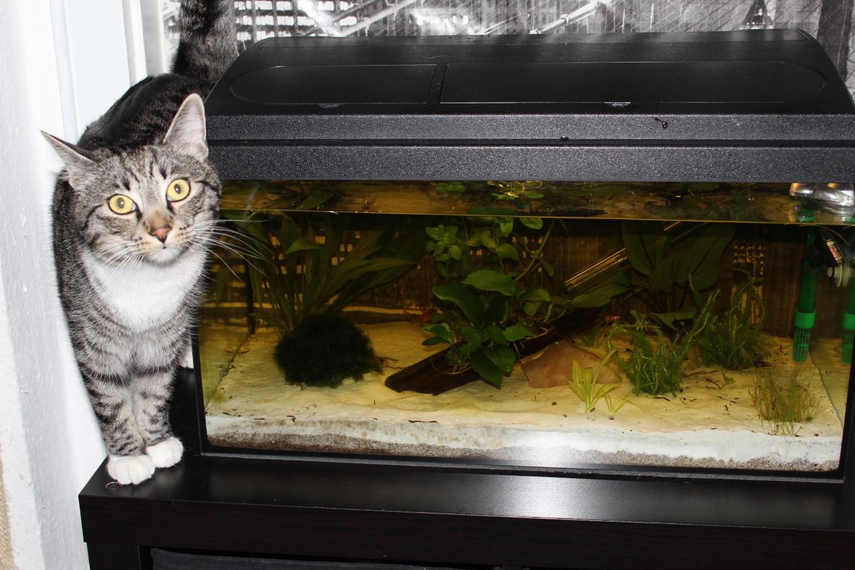 Linus: 10 kleine Fischilein…
