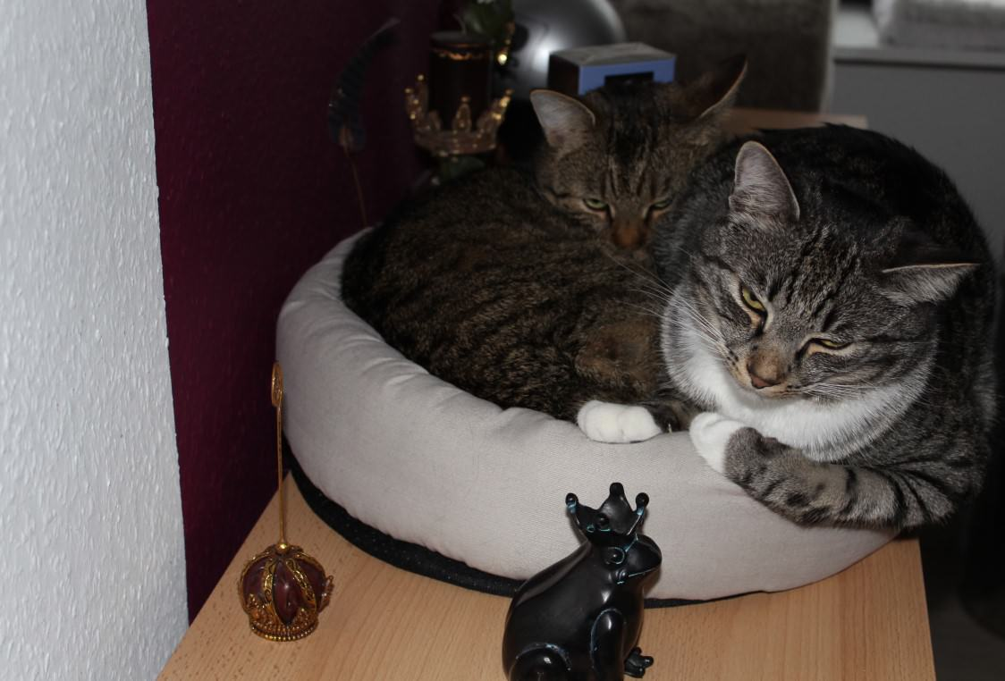 the3cats_2013_04_05_1844b