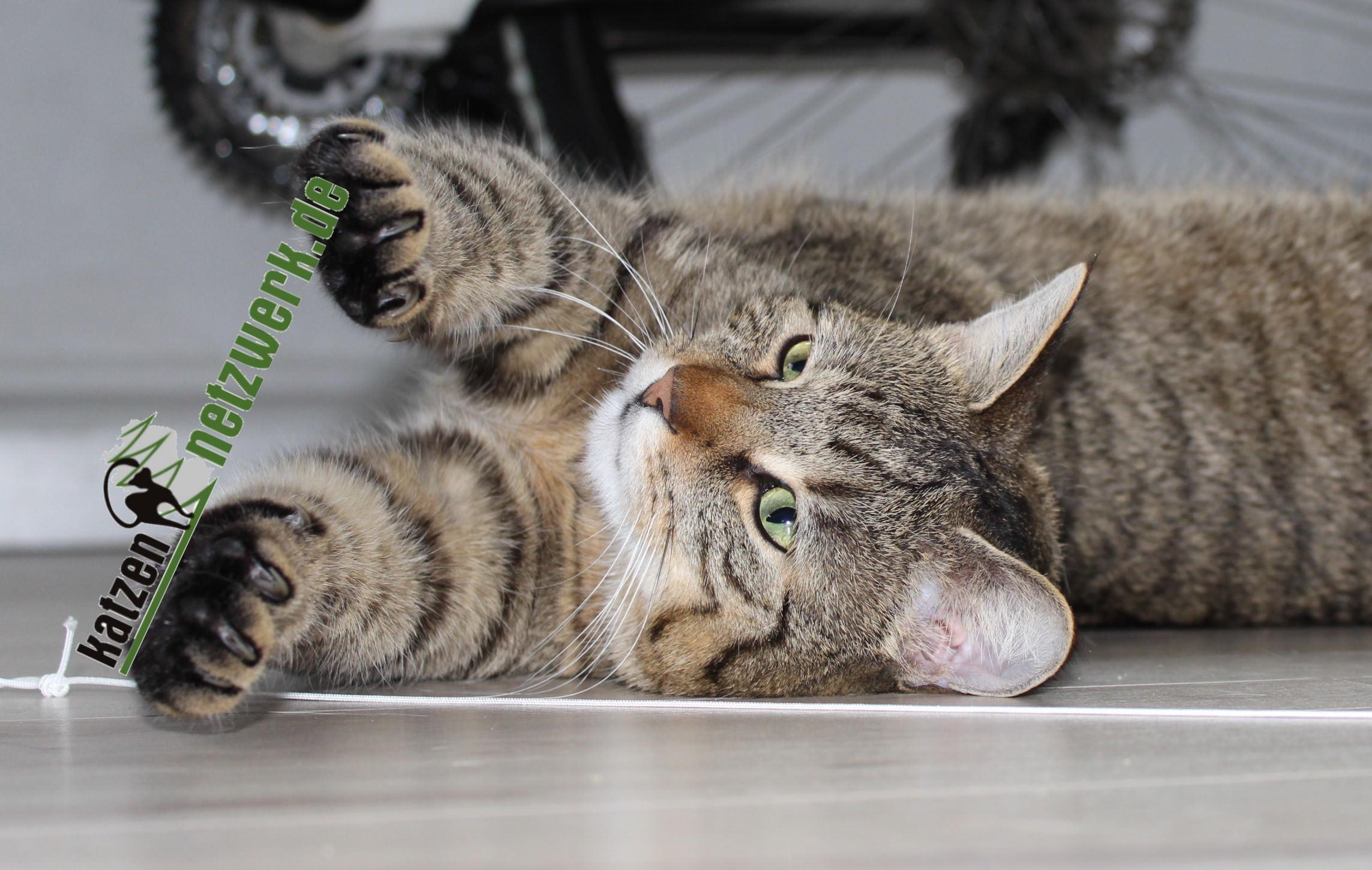 LiJaLu: Voll knorke – Das Katzennetzwerk