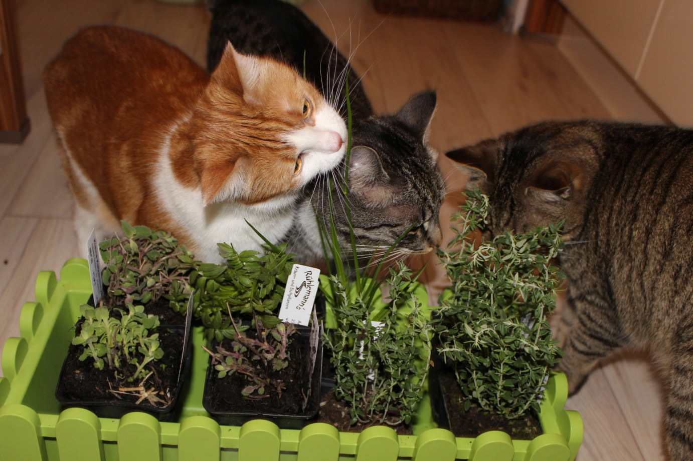 the3cats_2013_04_16_2756b