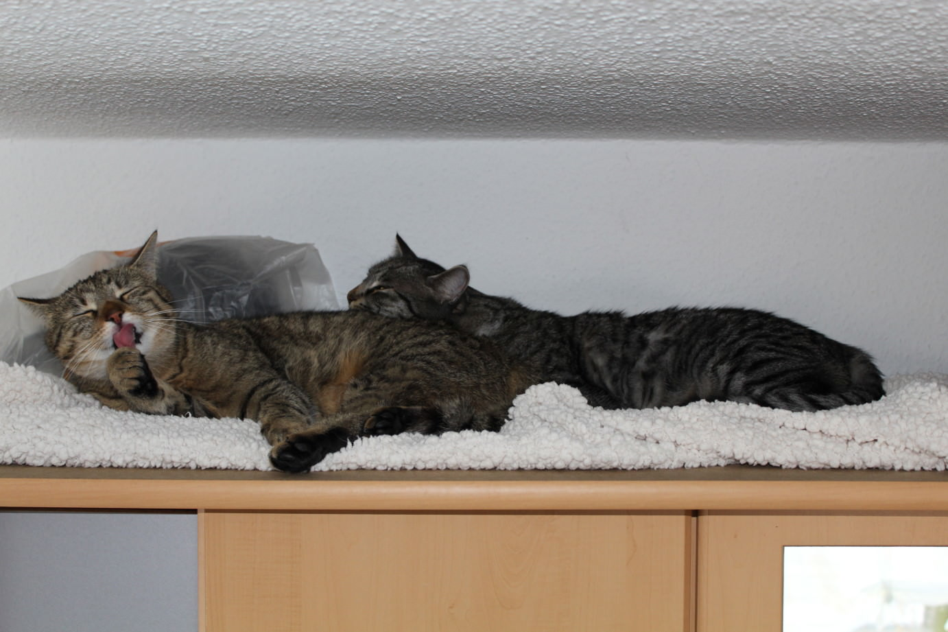 the3cats_2013_04_20_3074b