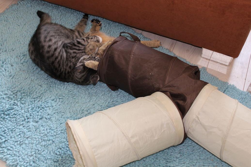 Jasper & Linus: Saugvorbereitung – Couchwelt und Bodenwelt