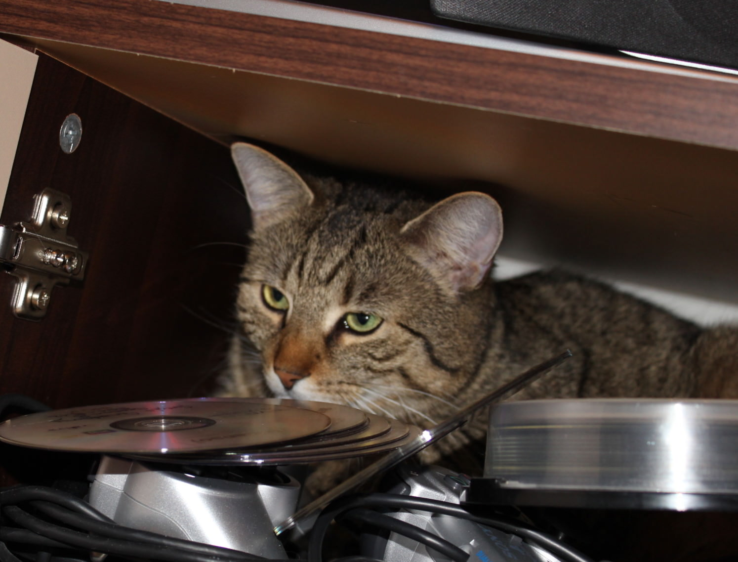 Jasper: Wo die Katzenrübe reinpasst…
