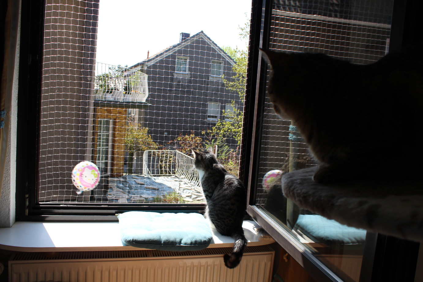 _the3cats_2013_05_01_3762