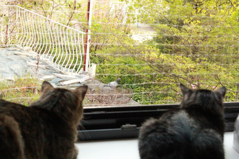 Jasper & Linus: Kater-TV 10-12 Uhr: Die Taube